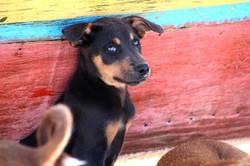 Malapascua doggies