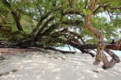 Port Orly Baum