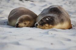 Sealbay on Kangaroo Island