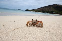 Mr Crab.
