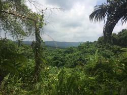 Millenium Cave Dschungel