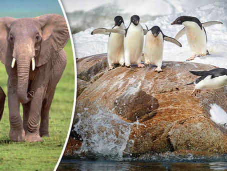 Do you have a company culture of elephants or penguins?