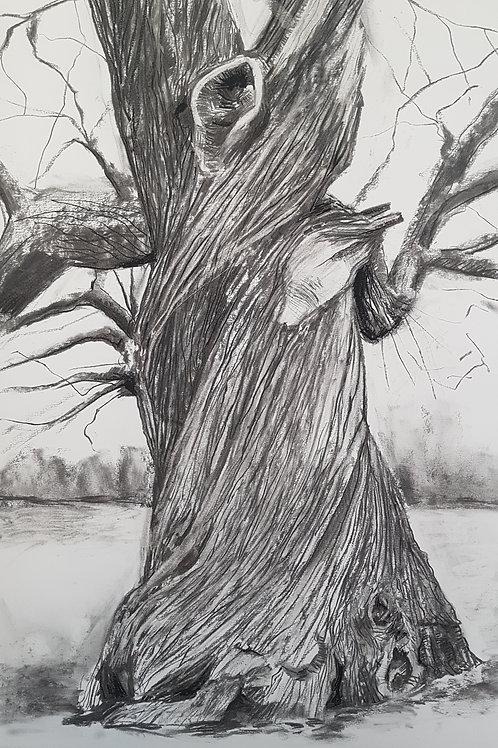 Tree Portrait no.6