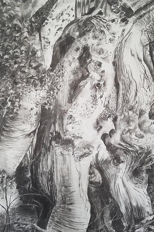 Tree Portrait no.4