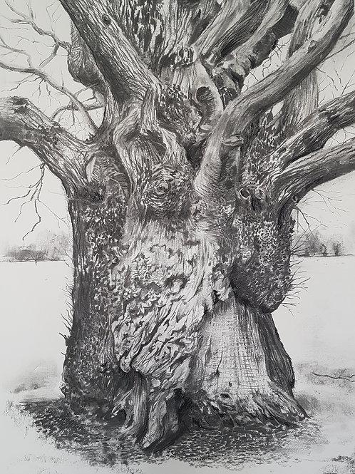 Tree Portrait no.2