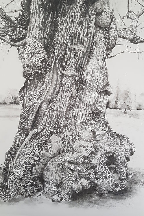 Tree Portrait no.1