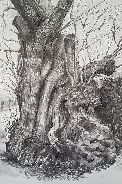 Tree Portrait no.3