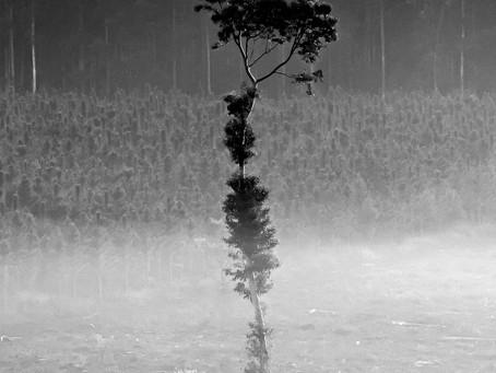 Esta foto tiene un simbolismo muy grande para mi...La deforestación en Misiones...