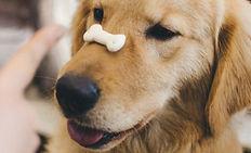 El entrenamiento de un cachorro con Boca