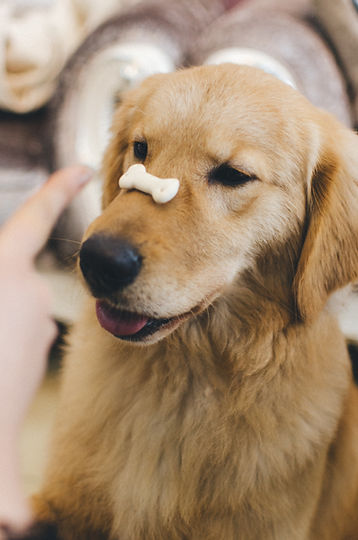 Weymouth Hingham Braintree Dog Training