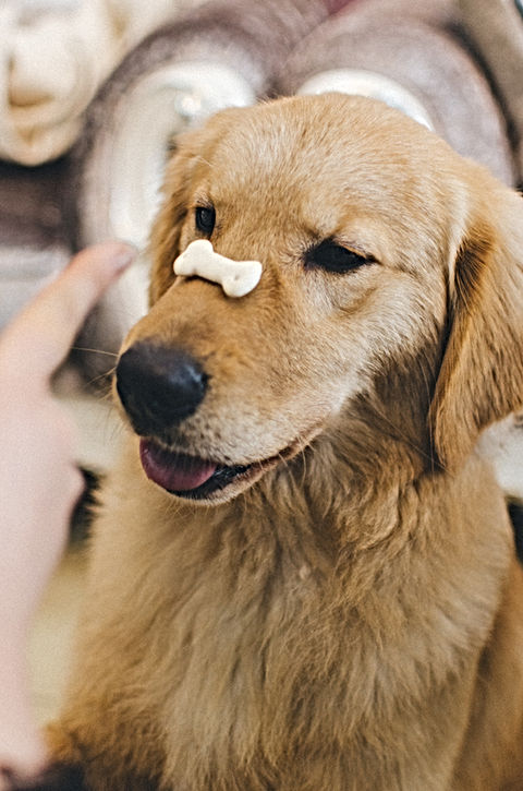 Training a Puppy with Snack