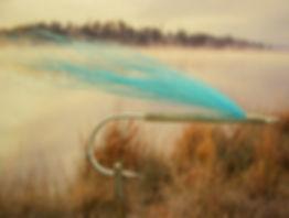 Silver Blue Jay
