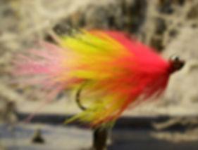 Parakeet, Eyed