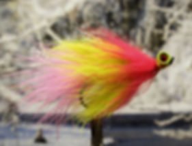 Parakeet, Barbell Eyes