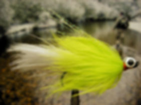 Parakeet, Chartreuse and White
