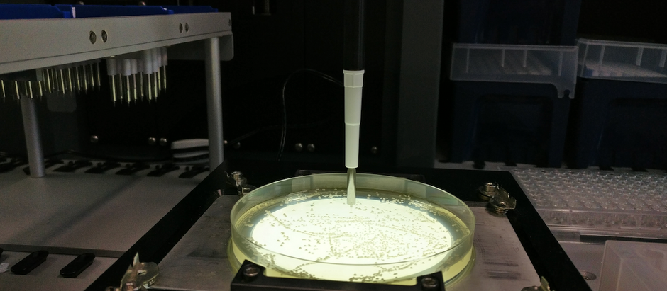 Rapid screening for yeast synthetic biology