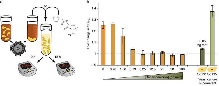 Antibiotics Biosynthesis
