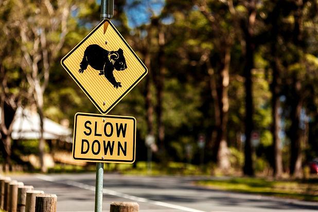 Road_sign_koala1.jpg