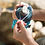 Thumbnail: Aonijie Windrunner Soft Flask Holder