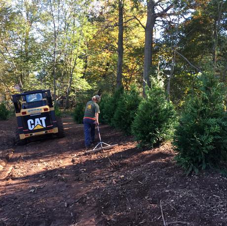 Tree Installation III