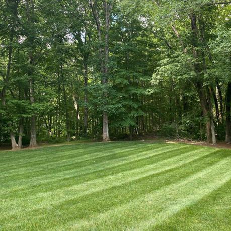 Beautiful Lawn, Freshly Mowed