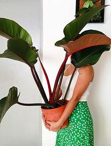 Plantisuss blog
