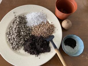 Stephania Erecta Experiment: Thailand & Indonesia Soil Mix - Part 1, The Soil