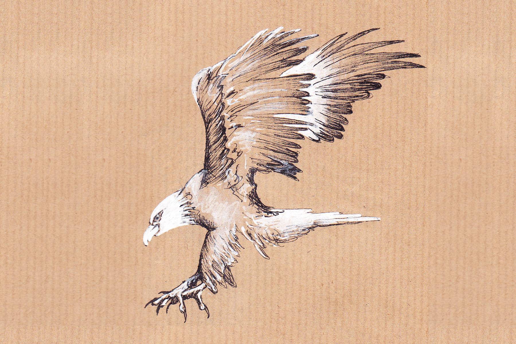 Sea eagle landing