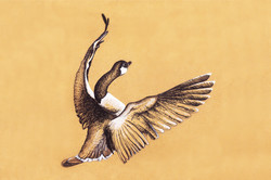 Goose flapping its wings