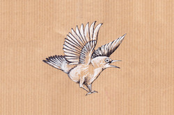 Angry garden bird