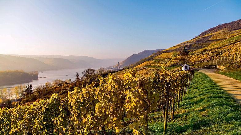 Wandern im Rheingau
