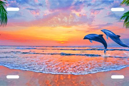 LP969 - Sunrise Beach Dolphins