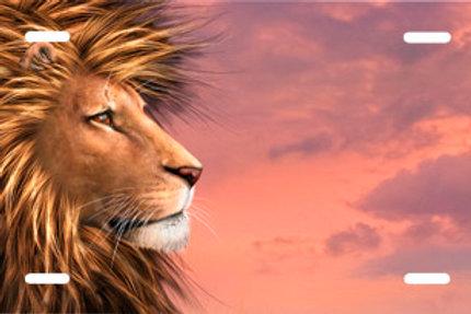 LP00724-Lion at Sunset