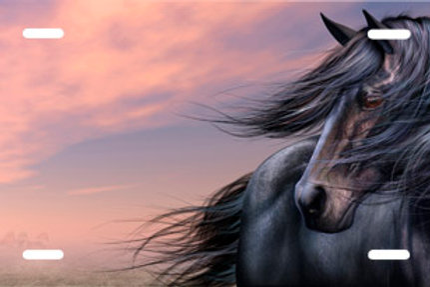 LP00722-Black Stallion