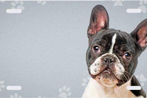 LP00988-French Bulldog