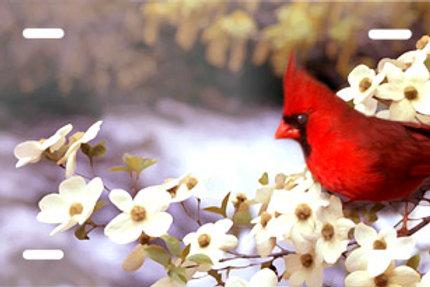 LP00588-Cardinal