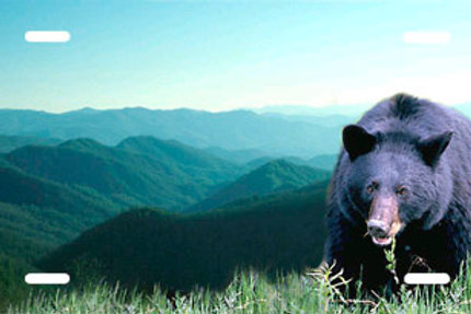 LP00574-Black Bear on Mountain