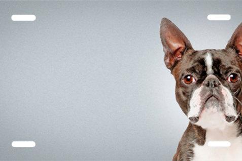 LP00491-Boston Terrier
