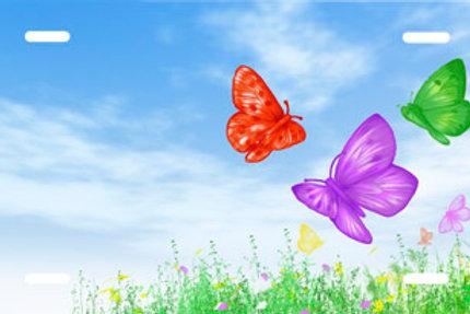 LP00613-Butterflies on Blue