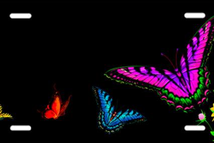 LP00899-Butterflies on Black