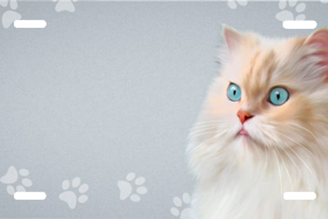 LP992 - Tan & White Cat