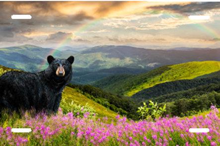 LP00937-Black Bear Looking Back