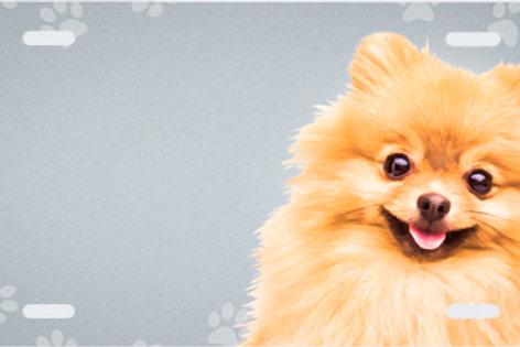 LP00398-Pomeranian with Paws