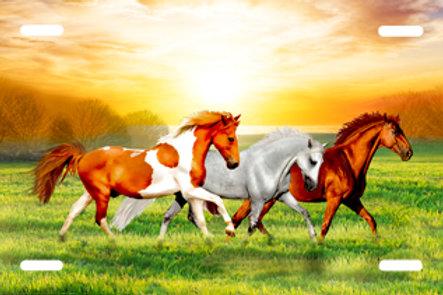 LP00986-Horses in Field
