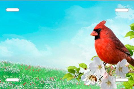 LP1019-New Cardinal
