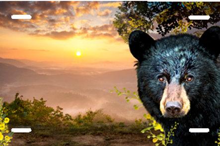 LP00938-Black Bear Peeking Through