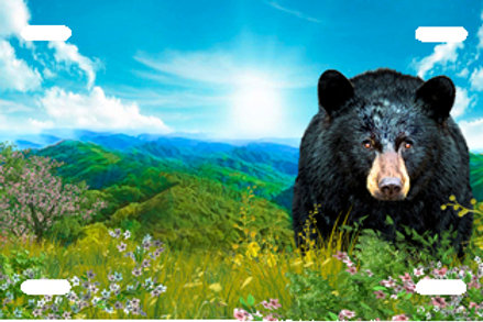 LP00958-Black Bear on Blue Mountain