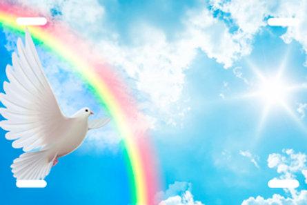 LP00966-Dove Rainbow
