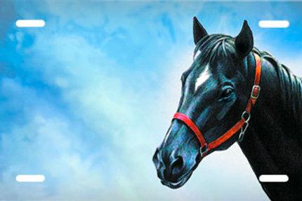 LP00596-Black Horse