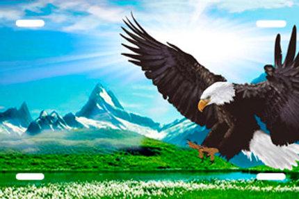 LP00555-Eagle Sky
